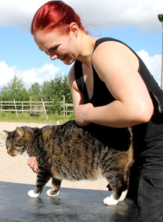 Brug kiropraktik til at forebygge skader i din kat. Min kat er skadet. Hvordan forebygger jeg skader i min kat? Brug veterinær kiropraktik til din kat der er faldet ned. Er min kat faldet ned? Min kat er faldet. Nedfaldskat. Kiropraktik til nedfaldskat. Kiropraktik til kat der er faldet ned. Min kat er faldet ned fra et træ. Min kat er faldet ned fra et tag. Spar penge på dyrlægeregningen ved at forebygge skader med veterinær kiropraktik til kat. Hvordan sparer jeg penge på dyrlægeregningen? Kan man spare penge på dyrlægeregningen? Billig dyrlæge? Funktionel behandling med kiropraktik til din kat. Kiropraktik til kat er en funktionel behandlingsform. Hvad er en funktionel behandling? Holistisk behandling med kiropraktik til dyr. Kiropraktik til dyr er en holistisk behandlingsform. Hvad er en holistisk behandling? Er kiropraktik holistisk? Er kiropraktik funktionel? Kiropraktik til dyr. Er kiropraktik til kat funktionelt? Er kiropraktik til dyr holistisk? Funktionel behandling til min kat. Holistisk behandling til min kat. Funktionel behandling til min kat. Holistisk behandling til min kat. Brug kiropraktik til din kat med slidgigt. Veterinær kiropraktik til din kat med slidgigt. Min kat har slidgigt. Hvad kan jeg gøre for min kat med slidgigt? Afhjælp smerter ved slidgigt med kiropraktik til din kat. Hvad kan jeg gøre for min gamle kat? Forebyg smerter ved slidgigt med veterinær kiropraktik. Afhjælp smerter ved slidgigt med kiropraktik til din kat. Forebyg slidgigt i din kat. Hvordan kan jeg forebygge slidgigt i mn kat? Veterinær kiropraktik forebygger slidgigt i din kat. Brug kiropraktik til din killing. Veterinær kiropraktik giver din killing den bedste start på livet. Hvordan giver jeg min killing den bedste start på livet? Hvordan giver jeg mine killinger den bedste start på livet? Kiropraktik til din killing. Giv din killing den bedste mulighed for et sundt og godt liv. Øg livskvaliteten for din hvalp. Hvordan øger jeg livskvaliteten for min killing? Sund og ra