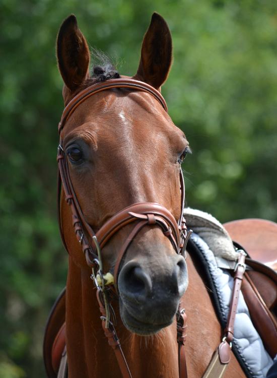 Jeg kommer gerne ud til dit arrangement. Hvem kan komme ud til mit arrangement? Arrangement omkring hest. Arrangement med hest. Arrangement omkring pony. Arrangement med pony. Jeg kommer gerne ud og holder foredrag. Hvem holder foredrag? Hvem kan holde foredrag? Foredrag om hest. Foredrag om pony. Hvem holder foredrag om hest? Hvem holder foredrag om pony? Foredrag i rideklub. Foredrag på ridekole. Foredrag på stutteri. Hvem kan holde foredrag i rideklub? Hvem kan holde foredrag på rideskole? Hvem kan holde foredrag på stutteri? Foredrag i stald. Hvem kan holde foredrag i stald? Foredrag i heste foreninger. Hvem kan holde foredrag i hesteforeninger? Jeg kommer gerne ud og holder workshops. Hvem holder workshop? Hvem kan holde workshop? workshop om hest. workshop om pony. Hvem holder workshop om hest? Hvem holder workshop om pony? Workshop i rideklub. Workshop i stald. Workshop på rideskole. Workshop på stutteri. Hvem kan holde workshop i rideklub? Hvem kan holde workshop på rideskole? Hvem kan holde workshop på stutteri? Hvem kan holde workshop i stald? workshop i heste foreninger. Hvem kan holde workshop i hesteforeninger? Foredrag af dygtig dyrlæge og dygtig dyre-kiropraktor i stald. Dygtig dyrlæge holder foredrag på rideskole. Dyre-kiropraktor holder foredrag på stutteri. Dygtig dyrlæge til dit foredrag i stalden. Dygtig dyre-kiropraktor til dit foredrag på din rideskole. Dygtig heste-kiropraktor til dit foredrag på dit stutteri. Dygtig pony-kiropraktor til dit foredrag i stald. Privat foredrag. Foredrag i hjemmet. Hvem kan komme til mit foredrag i hjemmet? Kan man få foredrag hjemme? Heste foredrag i dit hjem af sød dyrlæge. Foredrag om hest hjemme af dygtig dyre-kiropraktor. Pony foredrag i dit hjem af dygtig dyrlæge. Arrangement af dygtig dyrlæge og dygtig dyre-kiropraktor på stutteri. Dygtig dyrlæge holder arrangement på rideskole. Dyre-kiropraktor holder arrangement i stalden. Dygtig dyrlæge til dit arrangement på din rideskole. Dygtig dyre-kiropraktor til d
