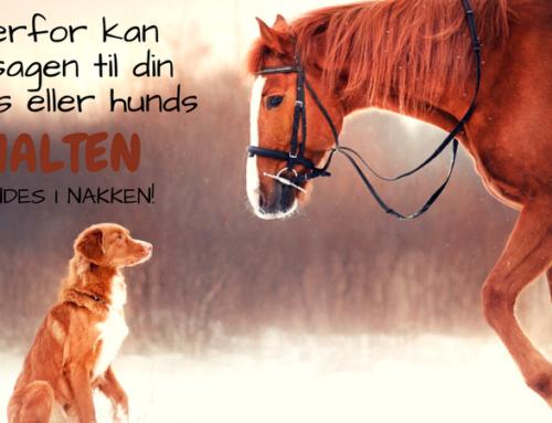 Derfor kan årsagen til din hests eller hunds halten findes i nakken!