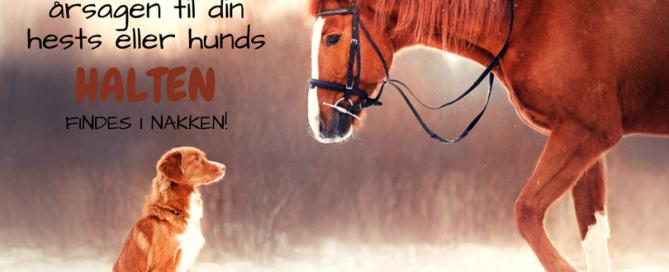 Derfor kan årsagen til din hests eller hunds halten findes i nakken! Hvis dit dyr halter, behøver det ikke at betyde, at det har ondt i benet! Faktisk kan årsagen til problemet være et helt andet sted i kroppen, for eksempel i nakken. Forklaringen på dette findes i fænomenet myofasciale kæder. Det er kæder af muskler og bindevæv, der løber igennem hele kroppen, og som er med til at opretholde kroppens balance. Hvis balancen brydes, for eksempel på grund af ubalancer i muskulaturen eller dårlig holdning, vil der opstå smerte. Men smerten kommer ikke nødvendigvis til udtryk dér, hvor problemet er. Smerten vil derimod opstå, hvor kroppen er svagest – på dens svageste led. Derfor kan svaret på langvarige smerter oftest findes i de myofasciale kæder, og genskabelse af kroppens balance er altafgørende for optimal heling og et smertefrit dyr.