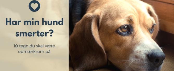 Det kan være svært at vurdere, hvornår din hund har brug for hjælp. Problemer i bevægeapparatet har det med at udvikle sig over tid. Det kan derfor være svært at se de snigende signaler, din hund sender, når du ser den hver dag. Hold øje med din hunds gang, muskler, holdning, slikken, adfærd, energiniveau, gang på trapper, appetit, sidde- og hovedposition, så er du godt på vej. Problemer i bevægeapparatet starter som regel med en let smerte, som gradvist udvikler sig. Det betyder, at din hund har tid til at tilpasse sig, den kompenserer for smerten. Den lærer at leve med smerten ved for eksempel at ændre på sit bevægelsesmønster. Det er selvfølgelig ikke optimalt. Vi har ansvaret for, at vores hund ikke går rundt med smerter. Derfor vil jeg gerne fortælle dig om følgende 10 signaler, som din hund kan sende dig, når den har ondt.