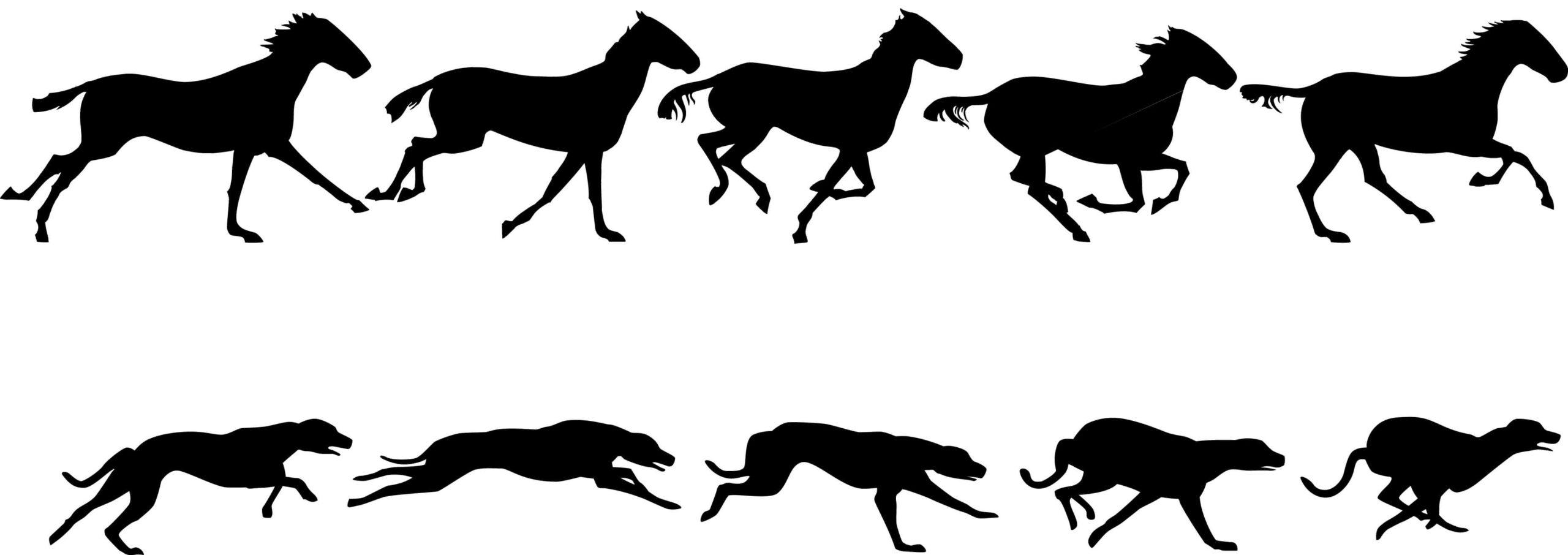 Her ses hestens gallop sammenlignet med hundens. Hesten er mere kompakt og har mindre bevægelse i ryggen i forhold til hunden under alle faser.