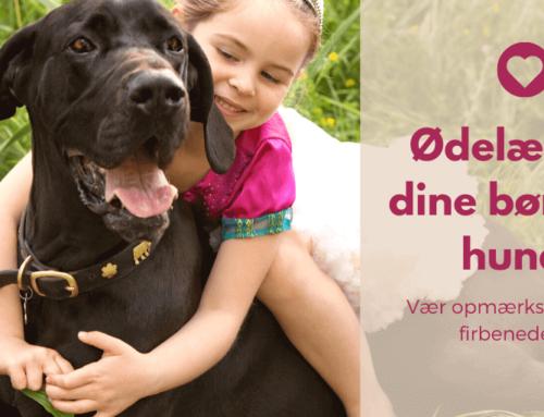Ødelægger dine børn din hund?