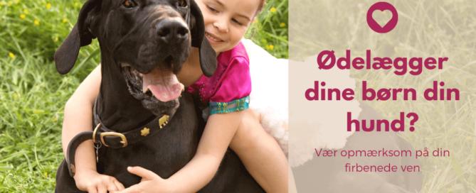 Ødelægger dine børn din hund? Læs dette indlæg og find ud af hvad du skal være opmærksom på når du har hund og børn.