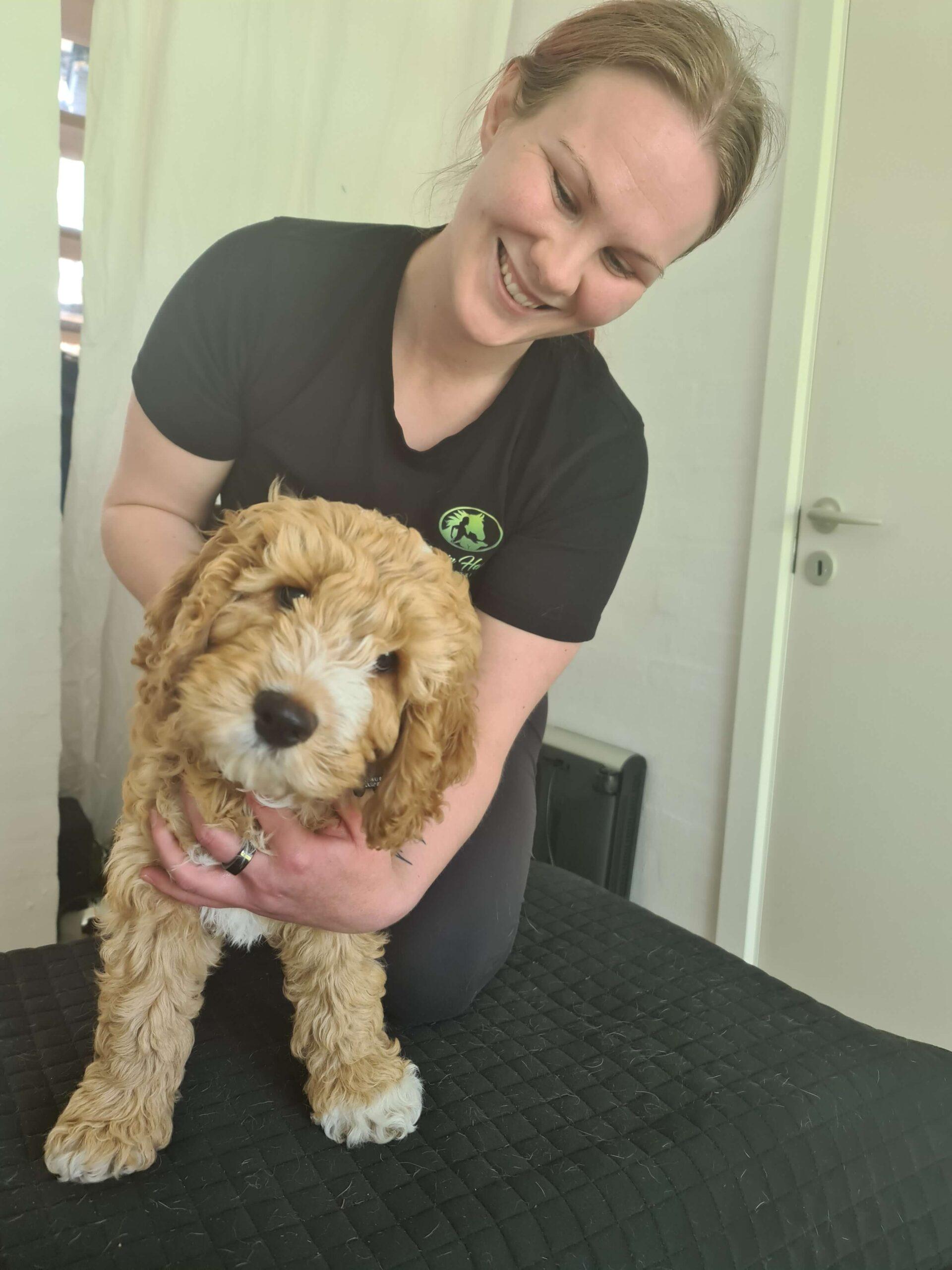 Kiropraktik og anden manuel behandling er ikke kun for gamle hunde eller hunde med specifikke problemer eller symptomer. Kiropraktik er også for din hvalp!